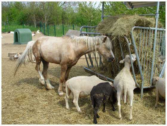 refuge pour animaux de la ferme chevaux poney anes ch vres moutons. Black Bedroom Furniture Sets. Home Design Ideas